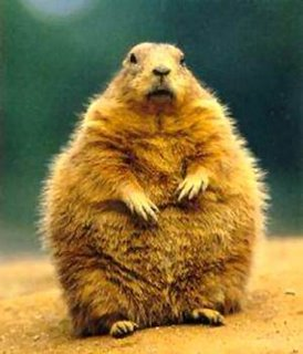 Happy Ground Hog Day! « woody's blog
